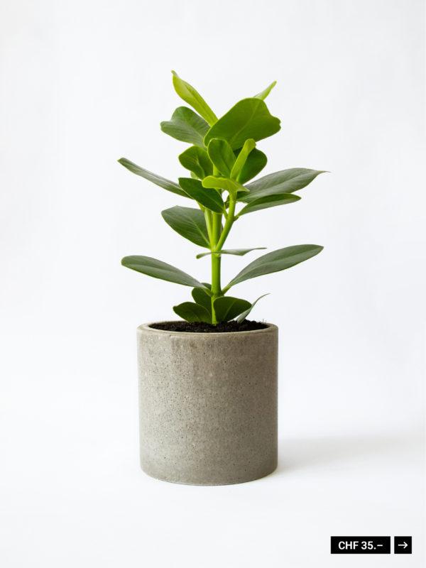 Blumentopf Beton